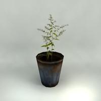 8 potted plants 3d model