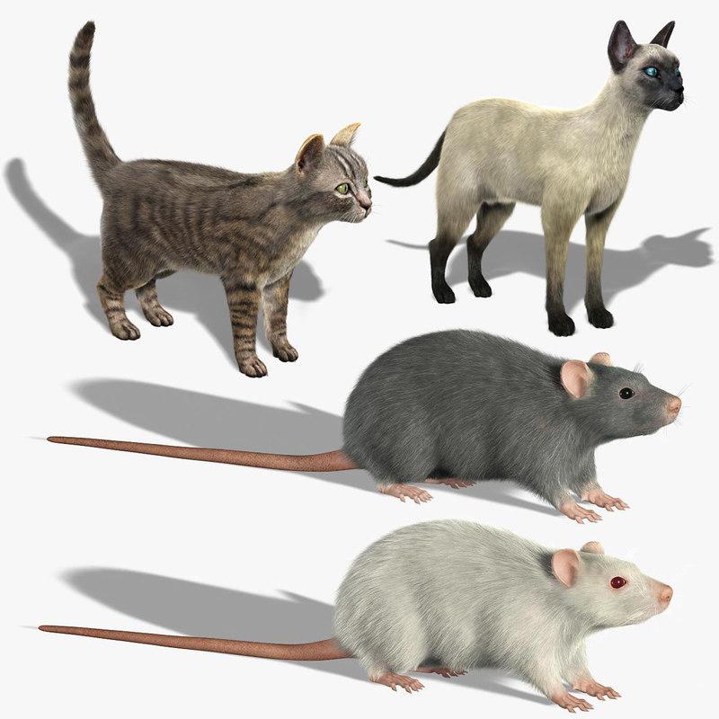 3d model cats rats