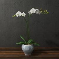 3d model orchid blue white ceramic