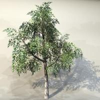 Tree_025.zip