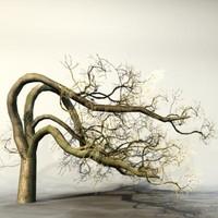 pc tree 3d max
