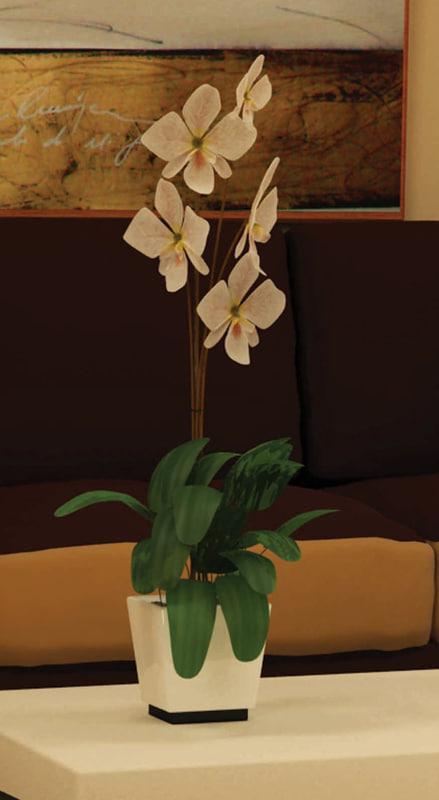 3d orquidea orchid