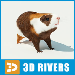 3d guinea pig cavy model