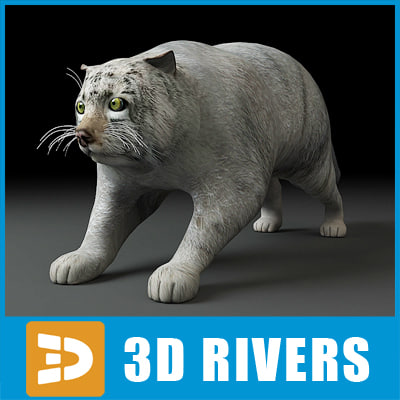 3d model manul pallas cat