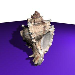 maya accurate seashell