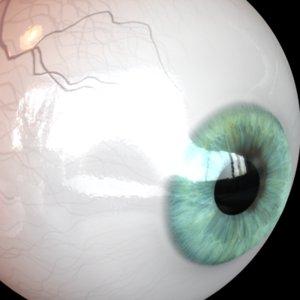 3d model eye pupil
