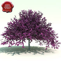 3dsmax cercis canadensis eastern redbud
