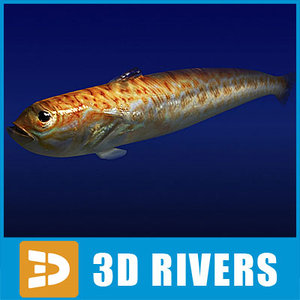 3d greater weever fish