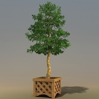 trees pinus 3d 3ds