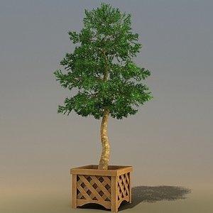 trees pinus 3d 3ds