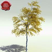 Populus Tremuloides (Quaking Aspen)