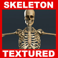 Human Skeleton TEXTURED