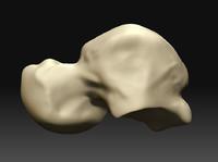3d model astragal -