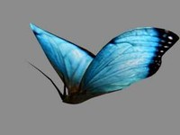 Beautiful colored butterfly insect nature animated textured wings