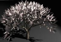 3d model cherry tree