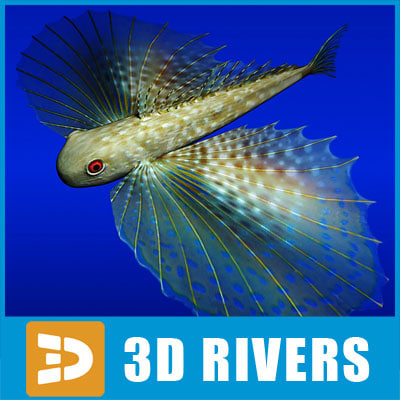 maya flying gurnard fish