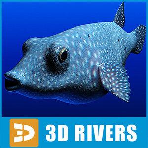 pufferfish fugu 3d model