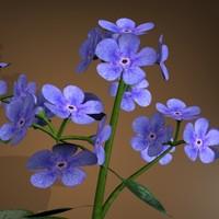 3d model flower pot jack frost