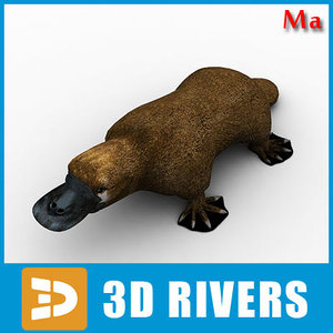 3d model platypus animals mammal