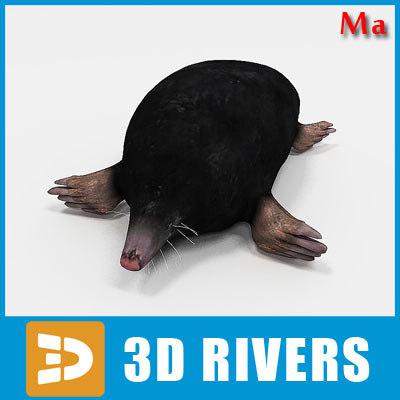 maya mole animals mammal