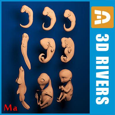 fbx human embryo development difference