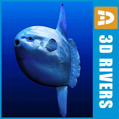 sunfish fish ocean 3d model