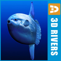 Ocean Sunfish by 3DRivers