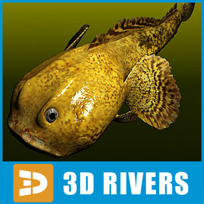 3d oyster toadfish fish toad model