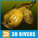 Toadfish 3D models
