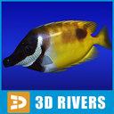 Rabbitfish 3D models
