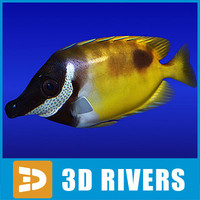 3d model rabbitfish fish