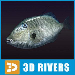 3ds triggerfish fish