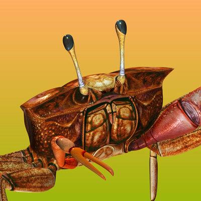 3d fiddler crab