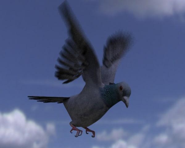 pigeon rigged flight 3d model