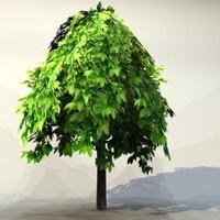 Tree_024.zip
