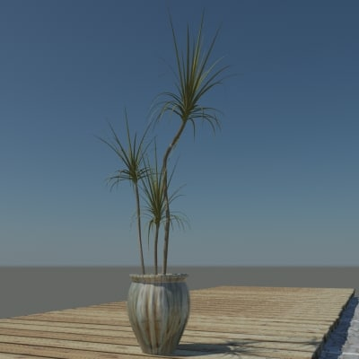 3d model of dracaena marginata plants