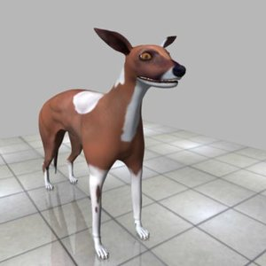 3d model greyhound bitch
