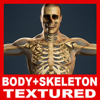 human skeleton male body 3d max