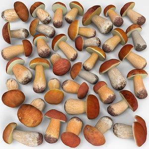 boletus mushrooms 3d model