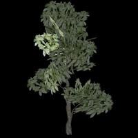 Tree model # 3