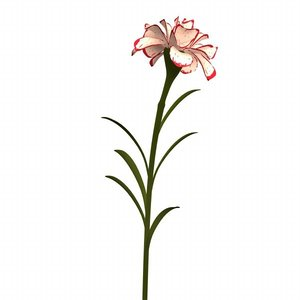 flowers carnation 3d 3ds