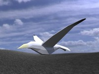 3ds max bird animateds