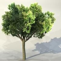 Tree_048.zip