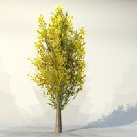 3ds max pc tree
