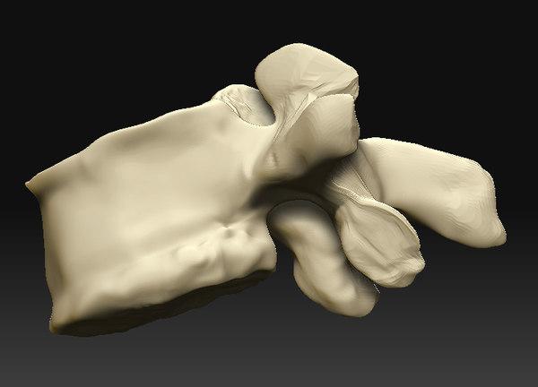 lumbar vertebra 3d model