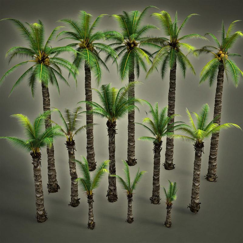 max palm realistic