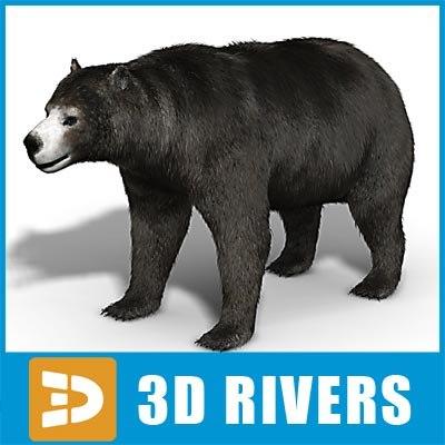 amphicyonidae bear 3d model