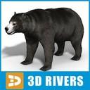 Amphicyonidae 3D models