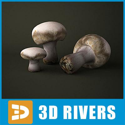 3d model button mushroom
