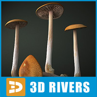 Grisette mushroom by 3DRivers